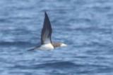 Off Newport: October 6, 2012