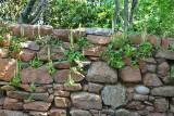 Wall vegetation