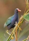 Birds -- All Florida
