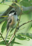 Birds -- Stratford, Ontario, August 2010