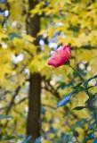 Last Bloom of Fall_8541.jpg