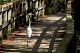 Strolling on the Boardwalk