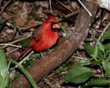 Prince of a Bird