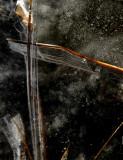 ice painting 181