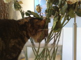 12062009862.jpg Oh, Smell the roses!