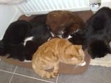 snuggled up.Tom Ziggy Marley Cleo and Sam.