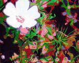 Grazalema flower