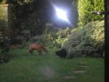 cleo meets foxy
