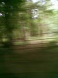Bramfield woods