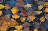 Leaves - Minolta Dimage 7HI.jpg