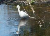 Egret - Minolta Dimage 7Hi.jpg