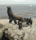 Harbor Seal - Nikon D70.jpg
