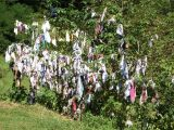 handkerchiefs tied on a tree for a good wish.