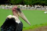 Herons, Cormorants and Egrets.