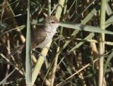 Warblers & Tree Birds