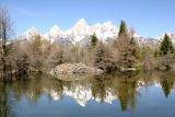Beaver dam - Schwabacher Landing