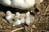 5 Chicks hatched