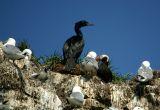 Birds on Gull Island
