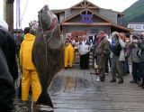 Huge halibut