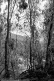 zone8-sd9-trees-at-Iznajar.jpg