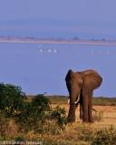 Tanzania (22 June - 11 July 2010)