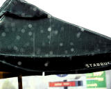 ds20060624a_0036a3w Umbrella in the Rain sumi-e.jpg