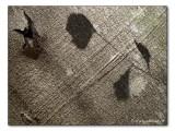 Baumrinden- Schattenbild / shadow image on bark (3892)