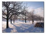 Wintertag (3524)