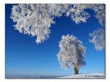 Winter (0125)