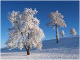 wintery trees / Bäume im Winter