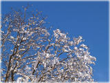 winterly / Winter
