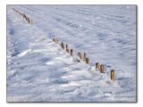 stubble field / winterliches Stoppelfeld