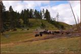 19 Yellowstone Park