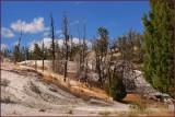 48 - Yellowstone nature at work