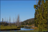 49- The bare trees are the remains of a serious forest fire several years ago.