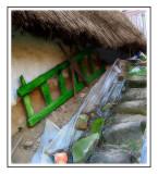 ladder  thatch.jpg