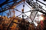 urban spider web