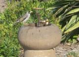 Bird stealing human device