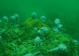 Underwater in Jervis Bay
