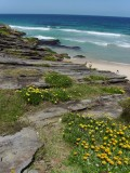 The coastal walk between my place and Bronte