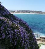 Coastal walk facing Bondi