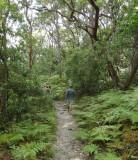 Forest danger