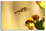 Insecten / Insects