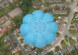 Balloonflower