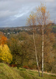 Birches and Stroud