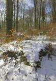 Beechwoods, Standish 5