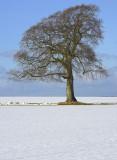 snowtree57