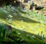 The Studio: Snowdrop Lawn