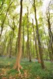 1853-widewoods