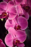 Flore / Flora